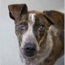 Helios a shelter dog