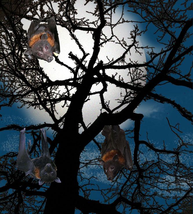 flying foxes bats halloween