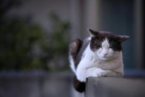 Cat photo 会釈 Nod