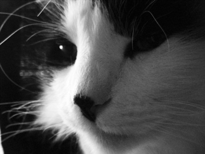 gray scale cat by DarkNinjaZelda