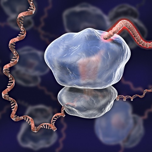 An artist's rendition of a ribosome. Credit: C. BICKLE/SCIENCE