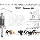"Sketch honoring Sewall Wright's landmark GENETICS paper ""Evolution in Mendelian Populations,"" drawn by Wright's great-grandson Alex Cagan (who also created the January cover of GENETICS). Cagan says: ""Mathematics were the foundation of all Wright's work. So I choose to show him actively producing one of the key equations from the paper. I also included some of the figures describing the principles of this work. Although an adaptive landscape is not included in the paper, it is a key visual tool he would later develop to explain his proposed 'shifting balance' theory, so it made sense to include it here. The diversity of pigmentation patterns on the guinea pigs demonstrate the variation in natural populations that Wright sought to understand. The guinea pig resting on his shoulder is a reference to the apocryphal story that, once during a lecture, he absentmindedly used one of his guinea pigs rather than a chalk eraser to wipe the board to make space for more equations!"""