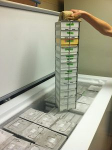 One of (several) freezers in the Tung lab containing boxes of fecal samples. Photo courtesy Jenny Tung.