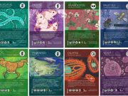 Phylo card game