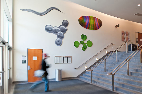 Installation of scientific art I did in our department's foyer.