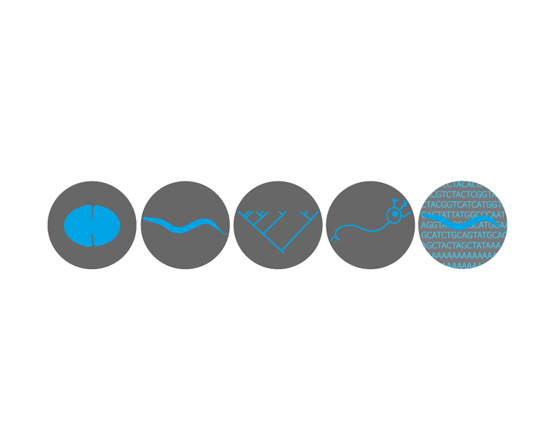 Logo for the 2011 C. elegans Meeting