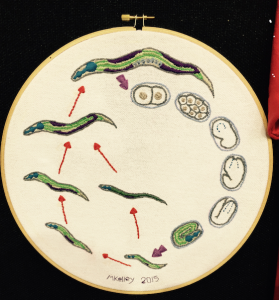 """Life cycle on a thread"", a second place winner by Melissa Kelley. 2015."