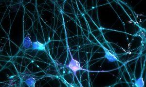 Neurons. Photo by Ardy Rahman via Flickr.
