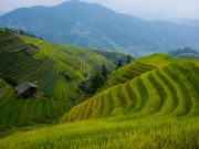 Terraced fields of cultivated rice in China. Photo by oarranzli via Flickr.