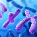 Image credit: Darryl Leja, National Human Genome Research Institute, NIH, via Flickr, CC BY-NC 2.0 license.