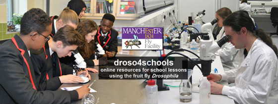 Image of droso4schools website