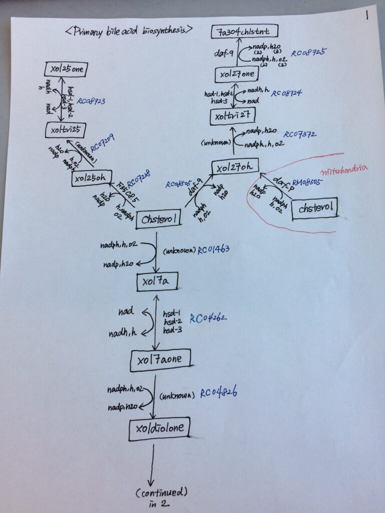 Bile Acids Hand Drawn Map