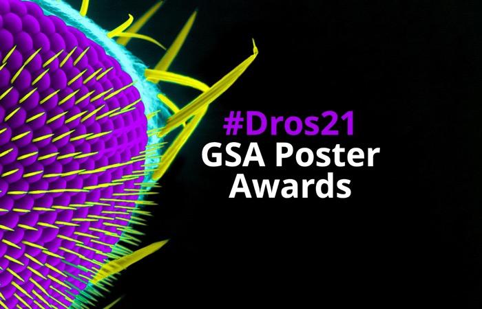 #Dros21 GSA Poster Award winners-image