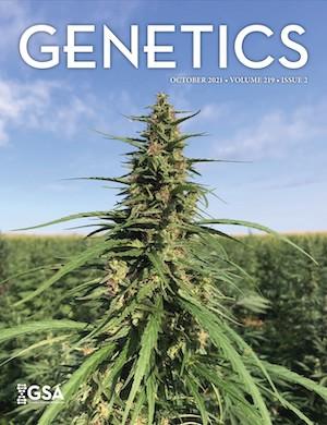 Oct 21 GENETICS journal cover showing hemp growing in a field